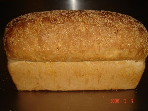 084 Mais Brood